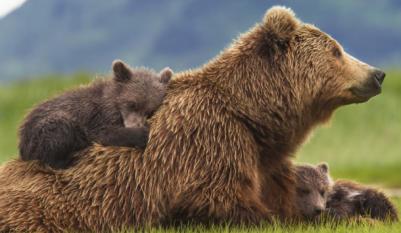 Mama bear hugs